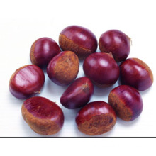2015 Chinese Organic Fresh Chestnut