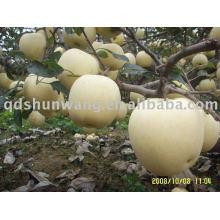 Классное свежее золотое яблоко