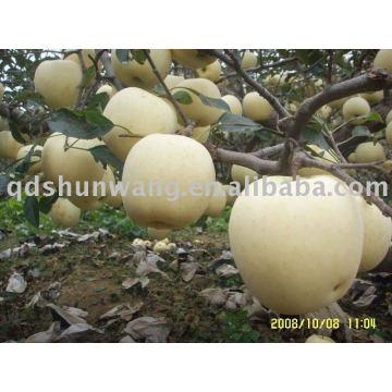 Clase A de manzana dorada fresca