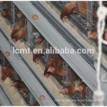 El pollo usa el equipo automático de la granja de aves de corral