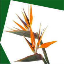Strelitzia reginae artificielle pot artificiel