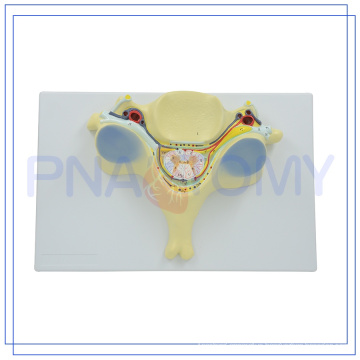 PNT-0615 high quality science working models toys made in China