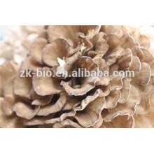 Polvo orgánico de setas Maitake