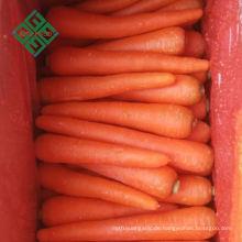 Direkt von der Fabrik Karotte-Erntemaschine frische Massenkarotten