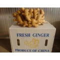 40' Reefer Container Fresh Ginger by Carton Packing