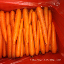 A Grade Chinese Fresh Carrot on Sale