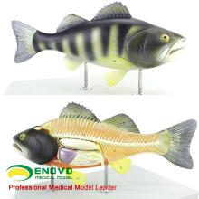 MODELO VETERINARIO AL POR MAYOR 12011 Modelo anatómico de peces con partes de órganos movidos
