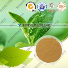 Green Tea Extract/ 40% ~98% Tea Polyphenol