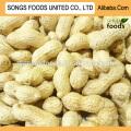 Wholesale Peanuts Inshell