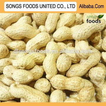 En gros cacahuètes en coque