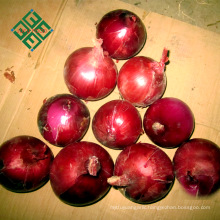 wholesale bulb onion