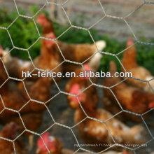 Filet de volaille hexagonal galvanisé à chaud de 3/8 po
