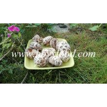 Trockenes weißes Blume Pilz-entwässertes Gemüse