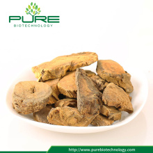 Hot Sale Raw Herbs rhubarb root, gốc Rhei