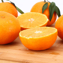 Customized for Offer Fresh Apricot,Organic Navel Oranges,Mandarin Orange From China Manufacturer Top orange producing states supply to Nicaragua Importers