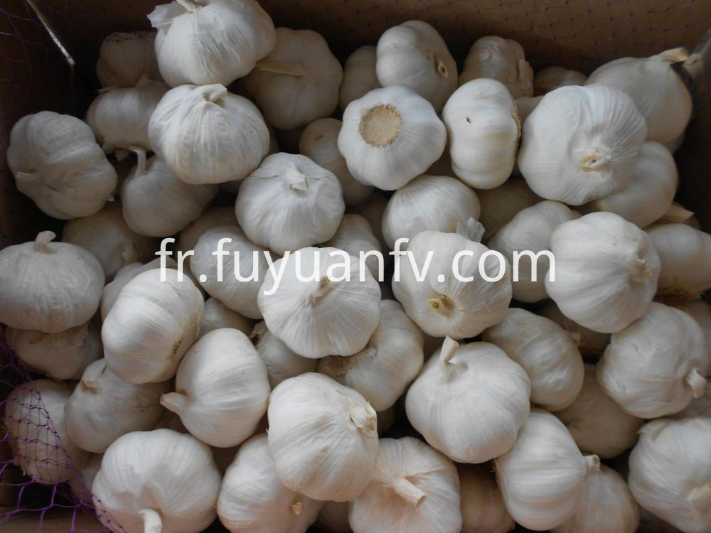 2018 Pure White Garlic