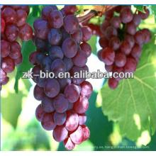 Extracto de semilla de uva 100% soluble en agua