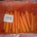 Zanahorias frescas de tamaño medio con especificación de alto grado para la venta