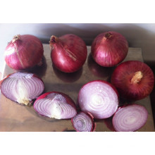Best fresh onion price ton wholesale onion