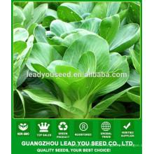 NPK07 Taoyu calidad pak choi semillas para la agricultura