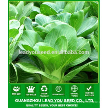 NPK07 Taoyu Qualidade pak choi sementes para a agricultura
