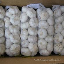 Fournisseur fiable pour l'ail blanc pur (5,5 cm et plus)