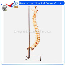 Модель ISO Advanced Flexible Spine