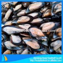 best frozen premium quality adequate half shell mussel
