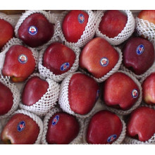 Red Delicious Apple/ Huaniu Apple/ Chinese Fruit