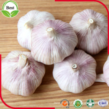 5.0cm Normal White Garlic