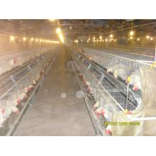 Geflügel-Käfig-Huhn, das Ausrüstung für Verkauf anhebt