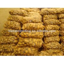 Frische Bio-Holland-Kartoffel