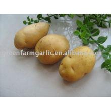 Новый урожай свежий Голландия 7 Картофель