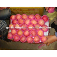Manzana fresca yantai fuji