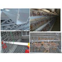 Nouvelle cage d'oiseaux de poulet de poulette bon marché de conception pour l'utilisation de ferme de volaille