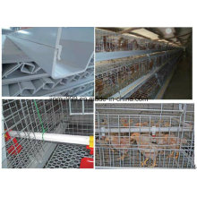 New Design Cheap Pullet Chicken Birds Cage for Poultry Farm Use