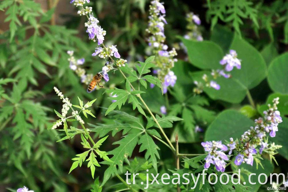 organic vitex honey