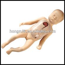 Modelo avanzado del entrenamiento de la intubación de la veta periférica y central neonatal de ISO