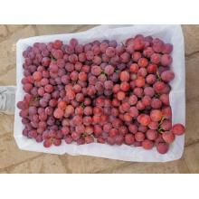 New Crop Fresh Grape