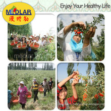 Medlar Low Pesticide Residues Wolfberry