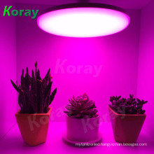 LED grow light greenhouse garden vegetables box for vertical aeroponics system