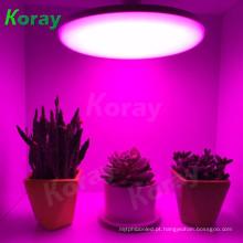 LED cresce a luz caixa de legumes jardim com efeito de estufa para o sistema aeroponics vertical