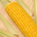 Nutrientes para milho contêm