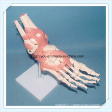 Яркая модель скелетного сустава с суставными связями