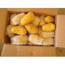 boa batata fresca com baixo preço na China
