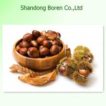 Китайский профессиональный свежий каштан с высоким качеством