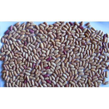 Exporter le haricot moucheté léger de catégorie 200-240 / G