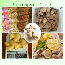 Fresh Ginger for Sale From China