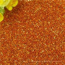 La exportación de alta calidad Nuevos cultivos mijo rojo mijo pájaro