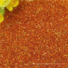 HPS Red Broom Corn Millet